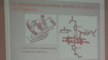 Química Biológica 2015 19 de Agosto Proteínas III