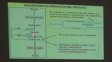 Química Biológica 2015 9 de Septiembre Metabolismo del Glucógeno en animales. Principios de regulación metabólica.