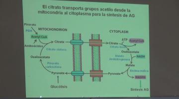 Química Biológica 2015 5 de Octubre. Biosíntesis de Lípidos.
