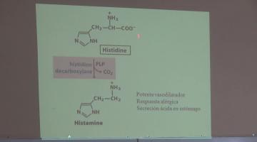 Química Biológica 2015 19 de Octubre Biosíntesis de Aminoácidos, Nucleótidos y Moléculas relacionadas