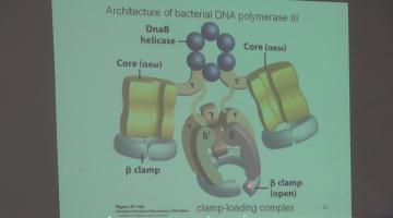 Química Biológica 2015 28 de Octubre Metabolismo de DNA