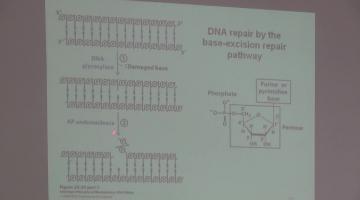 Química Biológica 2015 2 de Noviembre Metabolismo de DNA (II)