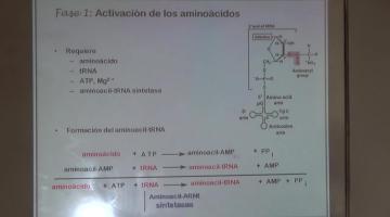 Química Biológica 2015 9 de Noviembre Metabolismo de Proteínas