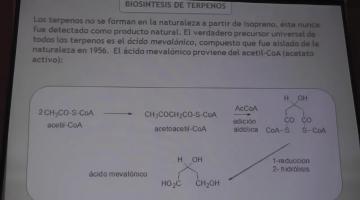 Química Orgánica II 2016 19/04 Final Lípidos y Terpenos