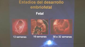 Toxicología y Química Legal 2016 4 de Octubre Efectos de las sustancias químicas en el embarazo, la niñez y la ancianidad.