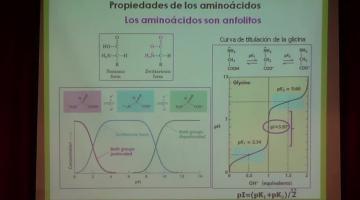 Química Biológica 2017, 8 de Agosto. Proteínas (I).