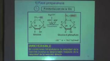Química Biológica 2017, 31 de Agosto.Metabolismo de Glúcidos I.
