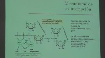 Química Biológica 2017, 31 de Octubre. Metabolismo del ARN.