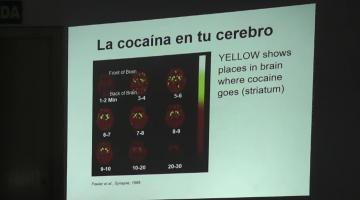 Farmacología (Bca.) 2019. 7 de Octubre.