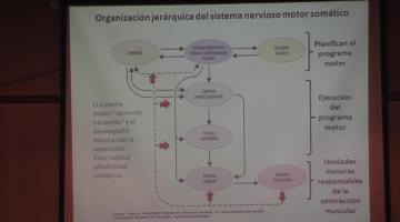 Fisiología 2020. Sistema Nervioso Motor II.