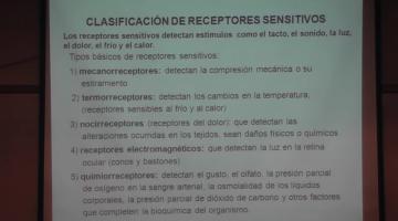 Fisiología 2020. Sensibilidad y Termoalgesia.