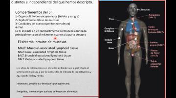 Inmunología. Teórica 6 B.